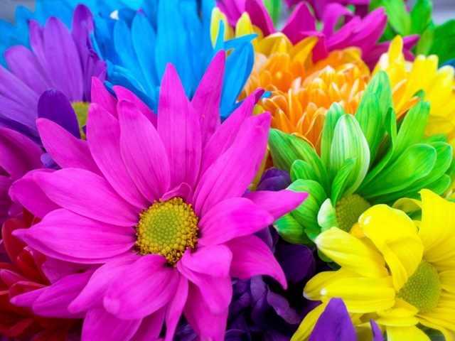 அழகிய மலர் காட்சிகள் (01) Flowers_13