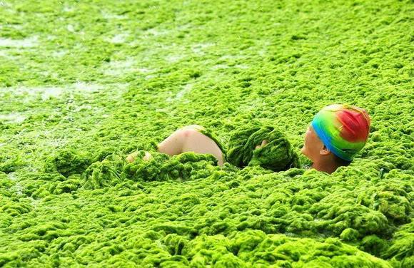 Pesta mandi alga di China (10 gambar) Pesta-alga09