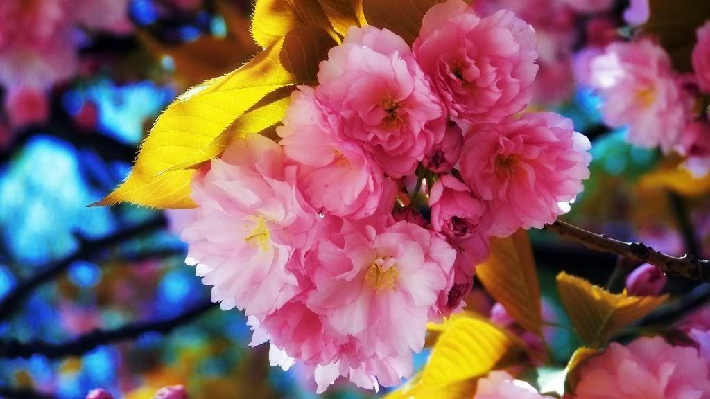 நான் ரசித்த மலர்கள் சில... - Page 6 Flowers