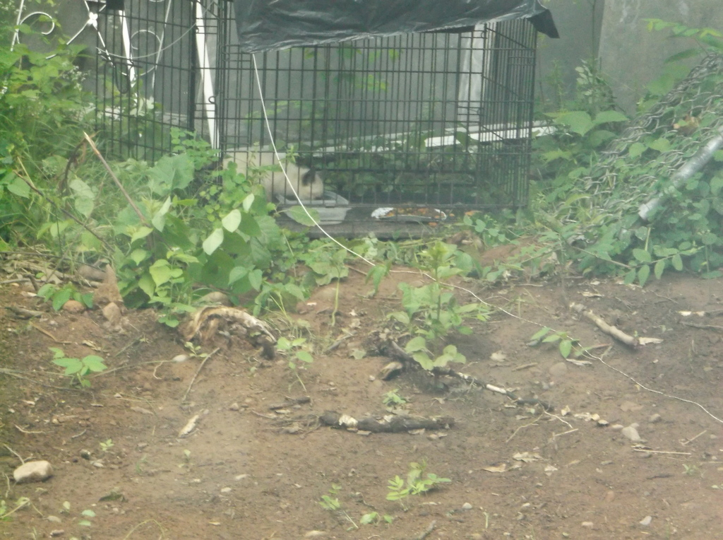 Dogs and 1 kitten DSCF80421