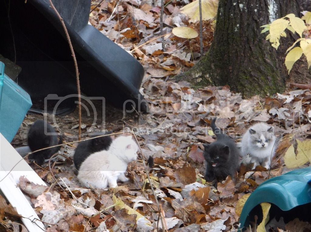 Abandoned Kittens DSCF8098