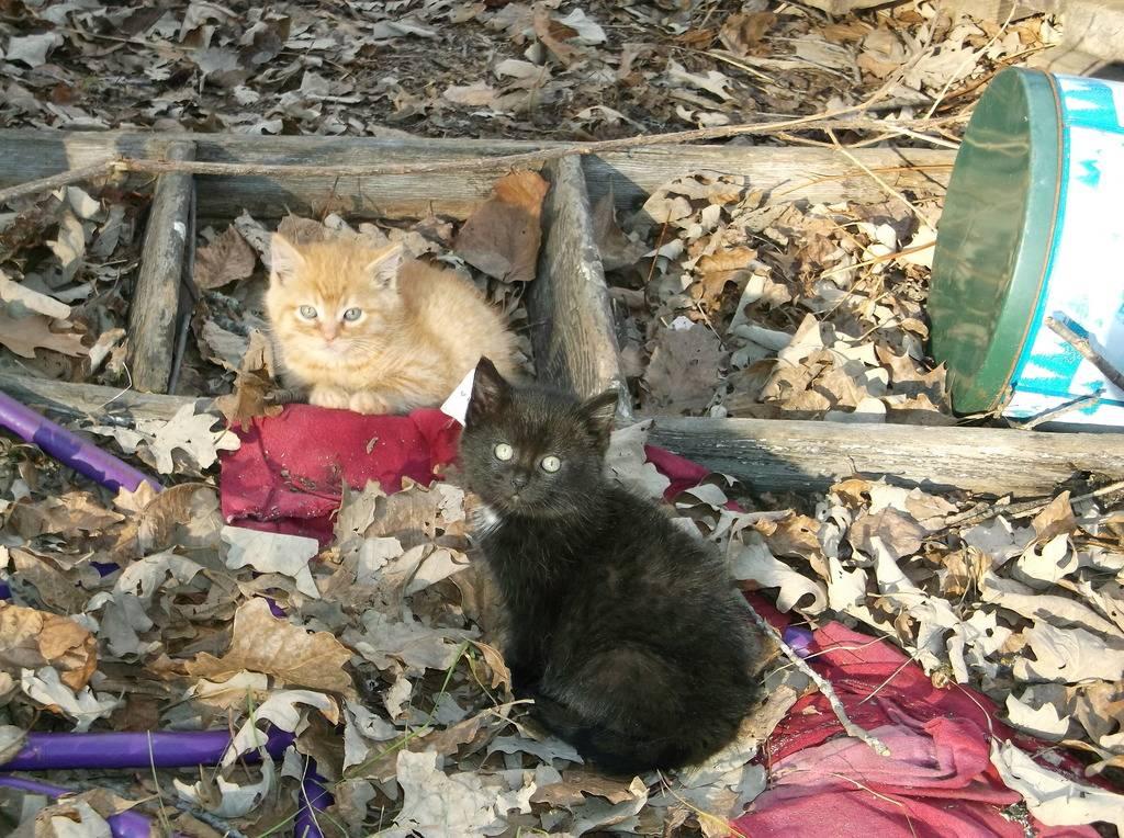 Abandoned Kittens DSCF8124