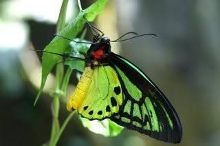 Пеперудена пролет - Page 3 Butterfly
