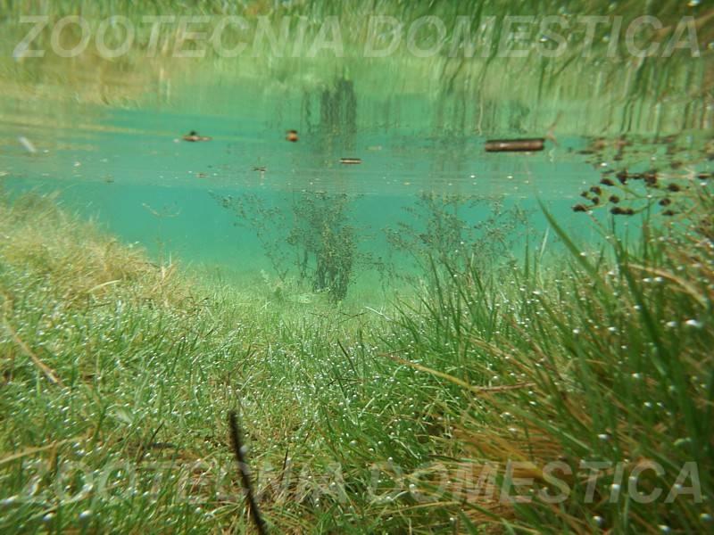 Triops cancriformis en la pradera inundada WEB_zpse9f76108