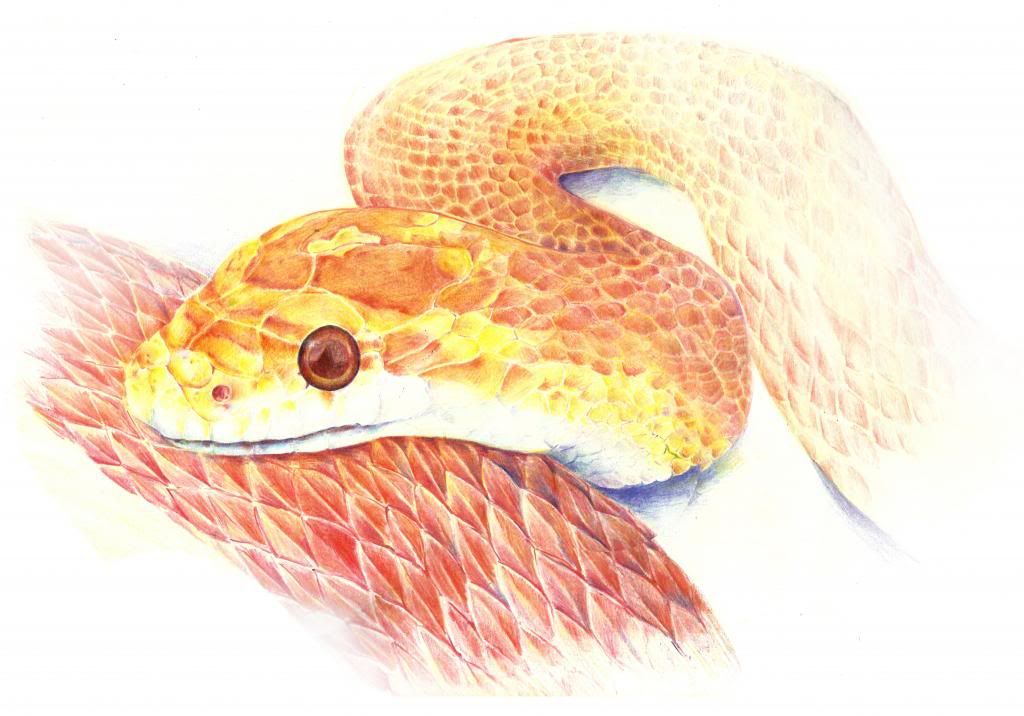 งูเงี้ยว - Page 10 E070E390_zpsbf702b70