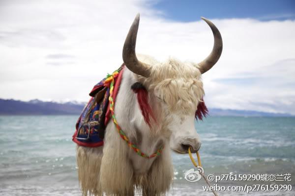 [News] alan's Tibet Trip Kk28