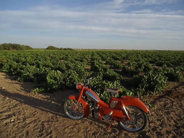 Saludos desde un pueblo de Albacete DSC00168