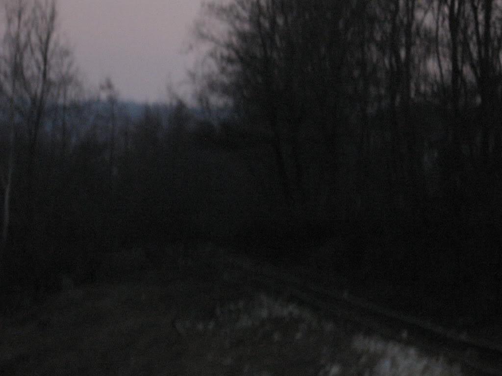 Govora - Bistrita (linie ingusta) - Pagina 2 IMG_2729