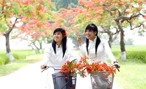 Kỷ niệm hè xưa Hoa-phuong-3