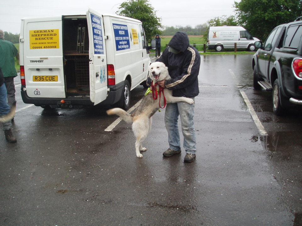 Luddy now with John homed ChertseyMeads010