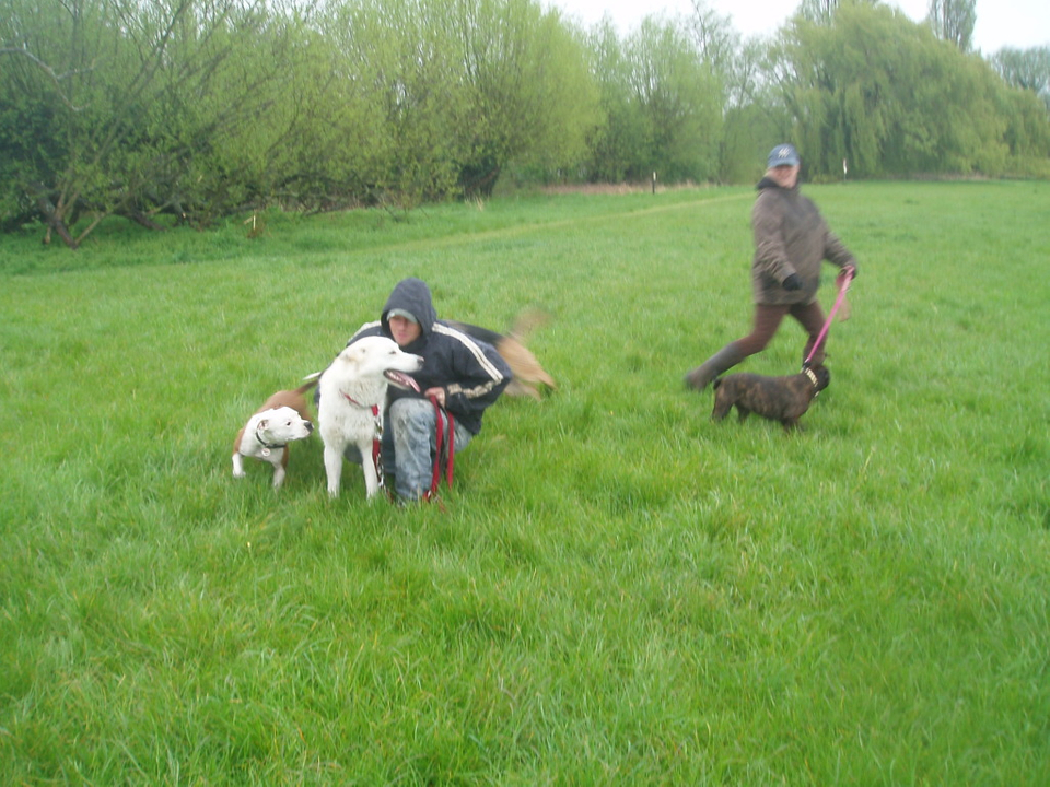 Luddy now with John homed ChertseyMeads027