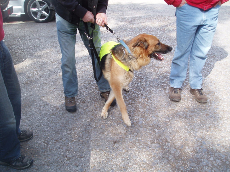 Alfred 2/3 yr old homed OckemWalk008