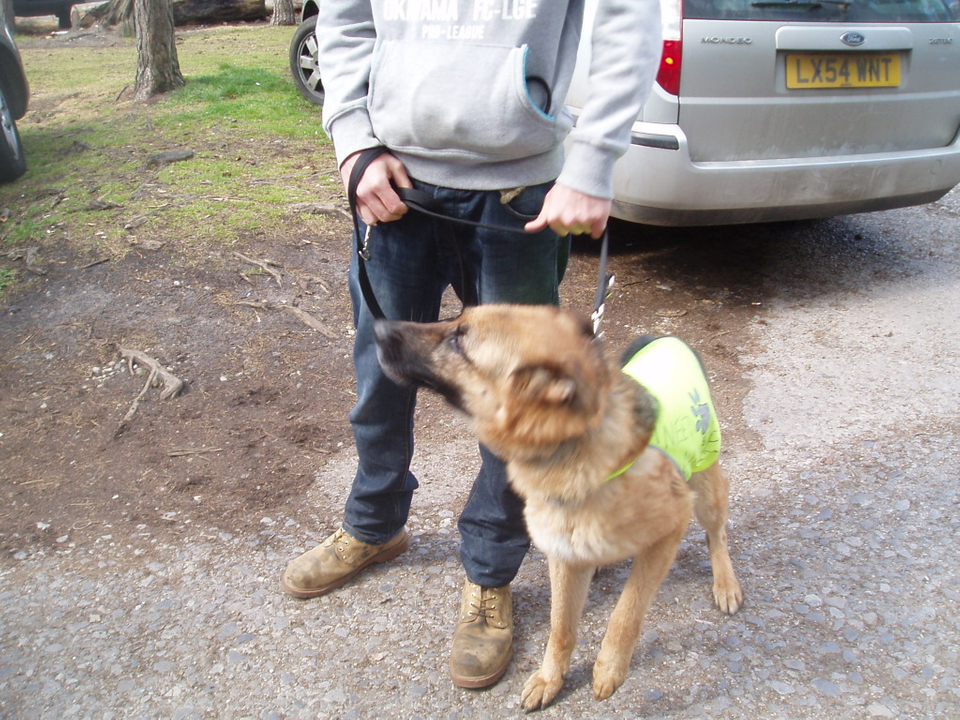 Alfred 2/3 yr old homed OckemWalk011
