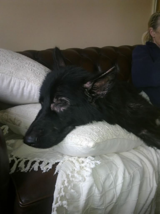 Prince VERY distressing pictures now homed PRINCE003
