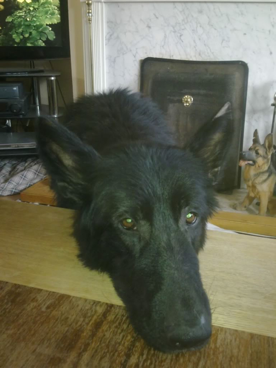 Prince VERY distressing pictures now homed PRINCE004-5