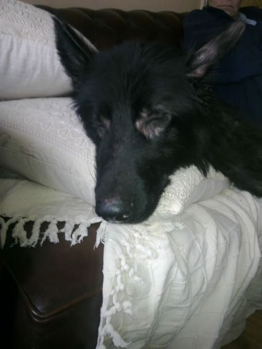 Prince VERY distressing pictures now homed PRINCE004