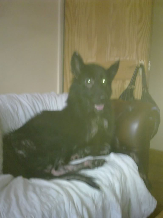 Prince VERY distressing pictures now homed Dogs031