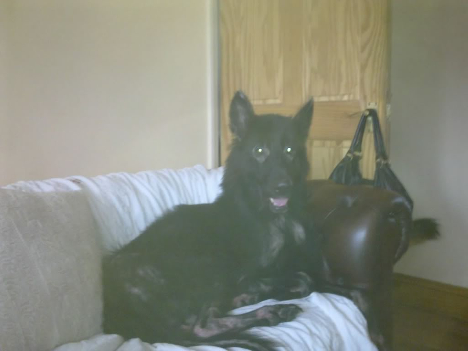 Prince VERY distressing pictures now homed Dogs032