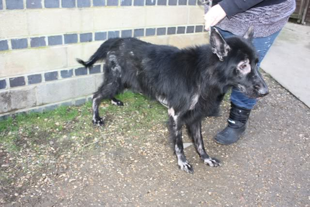 Prince VERY distressing pictures now homed Prince1