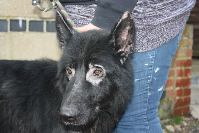 Prince VERY distressing pictures now homed Prince10