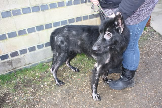 Prince VERY distressing pictures now homed Prince6
