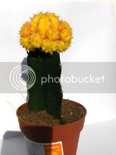 Cactusi HPIM6257