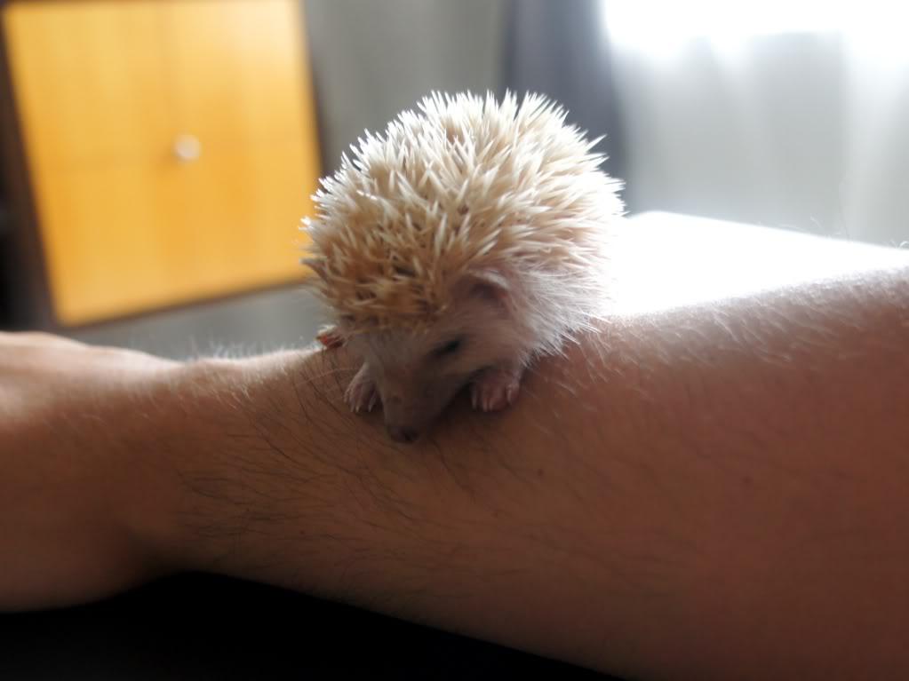 Rocky & Rosie, my lovely hedgehog DSC02834