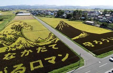 Những bức tranh độc đáo trên các cánh đồng lúa ở Nhật Tn_canhdong4891