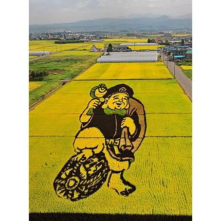 Những bức tranh độc đáo trên các cánh đồng lúa ở Nhật Tn_canhdong4894