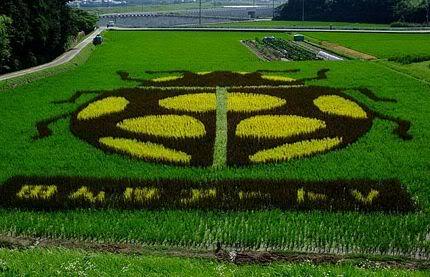 Những bức tranh độc đáo trên các cánh đồng lúa ở Nhật Tn_canhdong4895