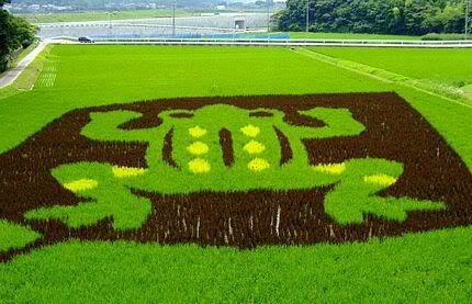 Những bức tranh độc đáo trên các cánh đồng lúa ở Nhật Tn_canhdong4896