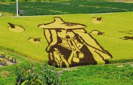Những bức tranh độc đáo trên các cánh đồng lúa ở Nhật Tn_canhdong4898