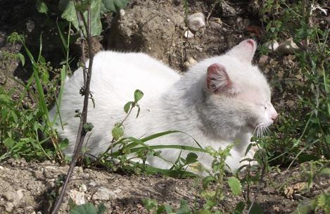 [Adoptada] Lima, gata branca felpuda - Lisboa / Margem Sul DSCF4117_2