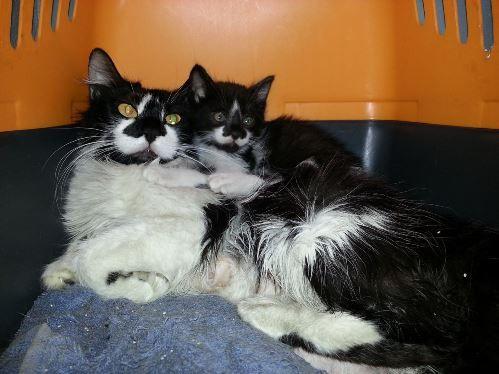 [Adoptados] 2 Gatinhos bebés, machos Lady2_zpsa8d2e2b1