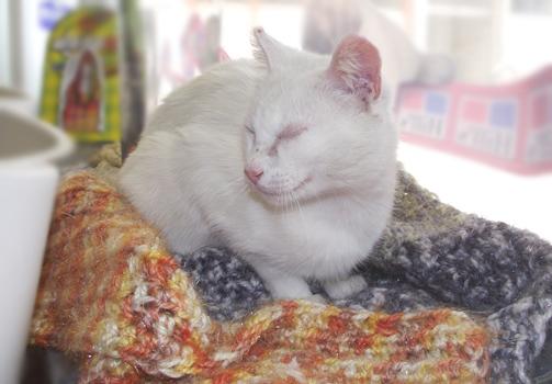 [Adoptada] Lima, gata branca felpuda - Lisboa / Margem Sul Lima3_2