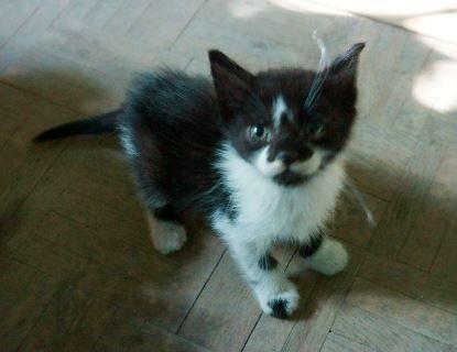 [Adoptados] 2 Gatinhos bebés, machos Socio_zps57220714