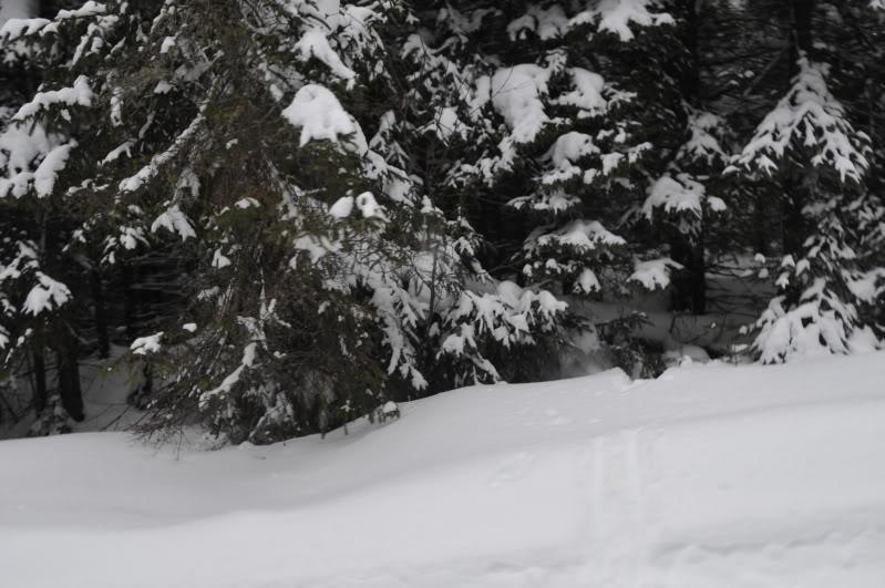 Toute une aventure en Acadie !!!!!! DSC_6693