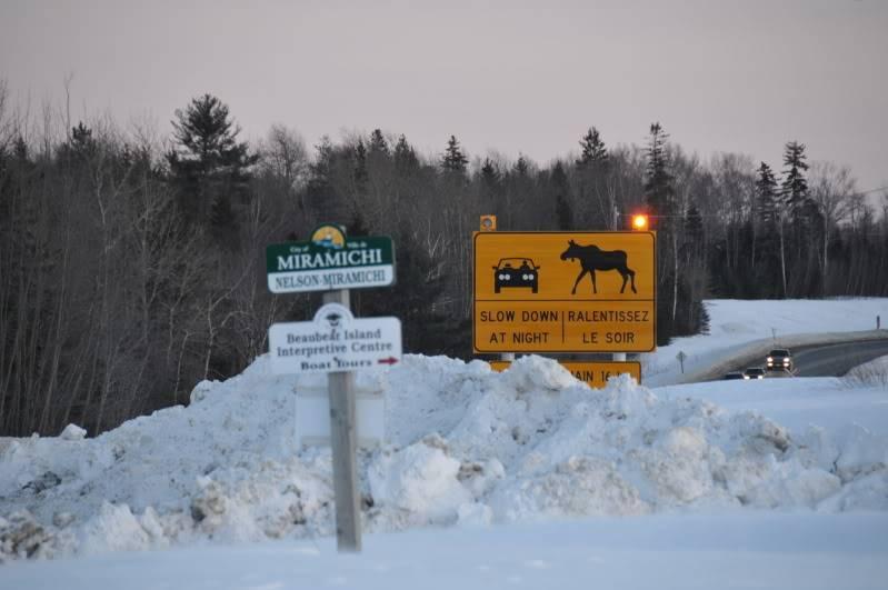 Toute une aventure en Acadie !!!!!! DSC_6957