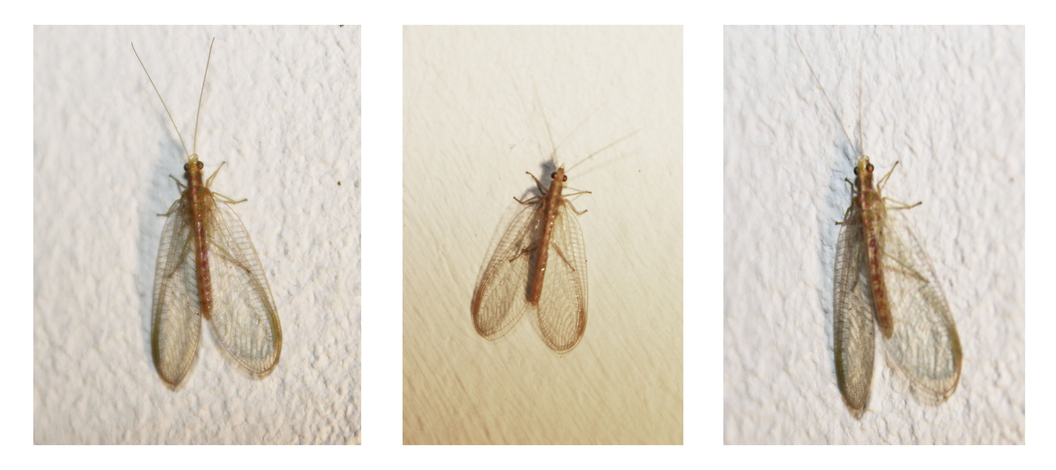 Termite or not termite ?! Insect3bundle