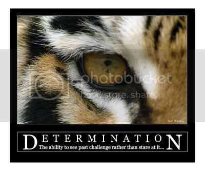[b]My lOve[/b] Determination---Siberian-Tiger