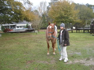 Gelding for Sale Picture093
