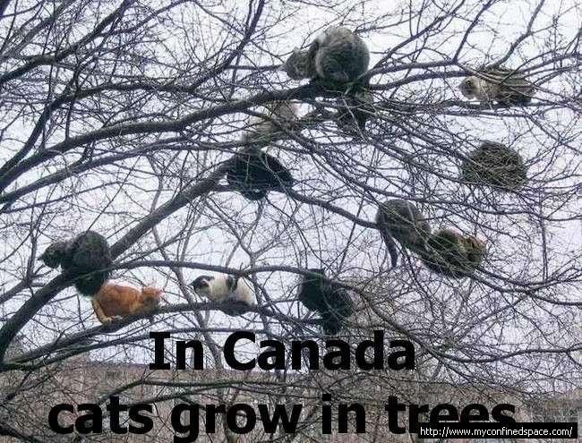 Rose's Pics XD Canada-cats-1
