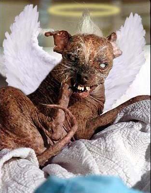 The worlds ugliest dog SamRIP