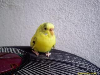 Burung Nuri & Kakak Tua PICT0002