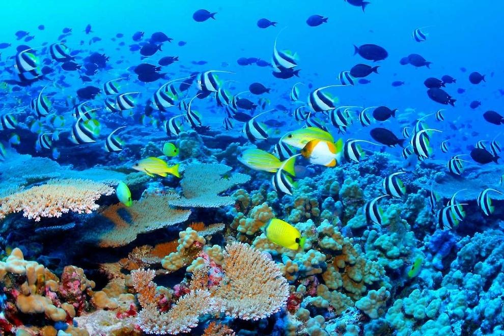 Shijoni 10 vendet me te bukura ne bote (FOTO) Koralet_zps0203efb9