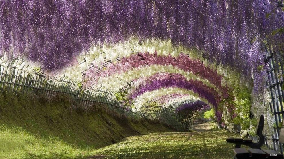 Shijoni 10 vendet me te bukura ne bote (FOTO) TuneliWisteria_zpsc7631a1a