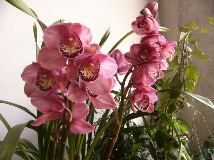 identification orchidée NNGBWVNTYRYTBSEUUSA