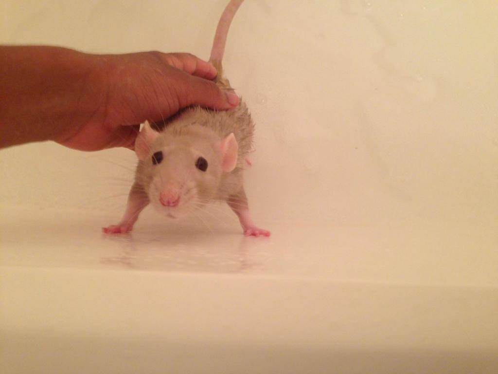 Post pet pictures here! Oatmealafraidofbath_zps3d8210e9