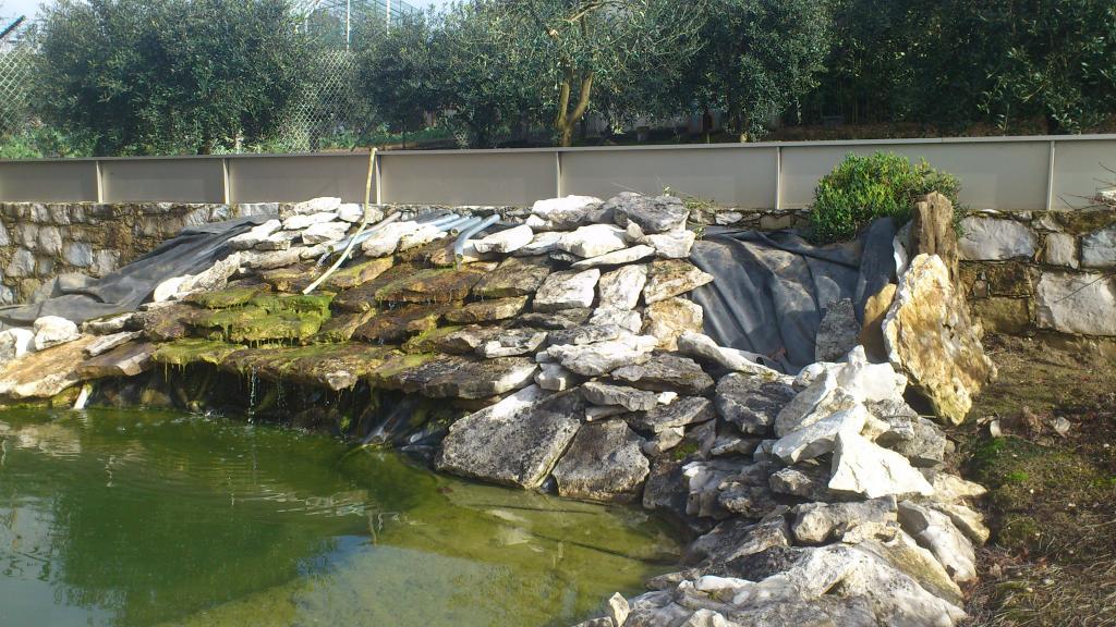 Aquaterrário---->Lago -Graptemys ouachitensis ouachitensis - Página 14 DSC_0729