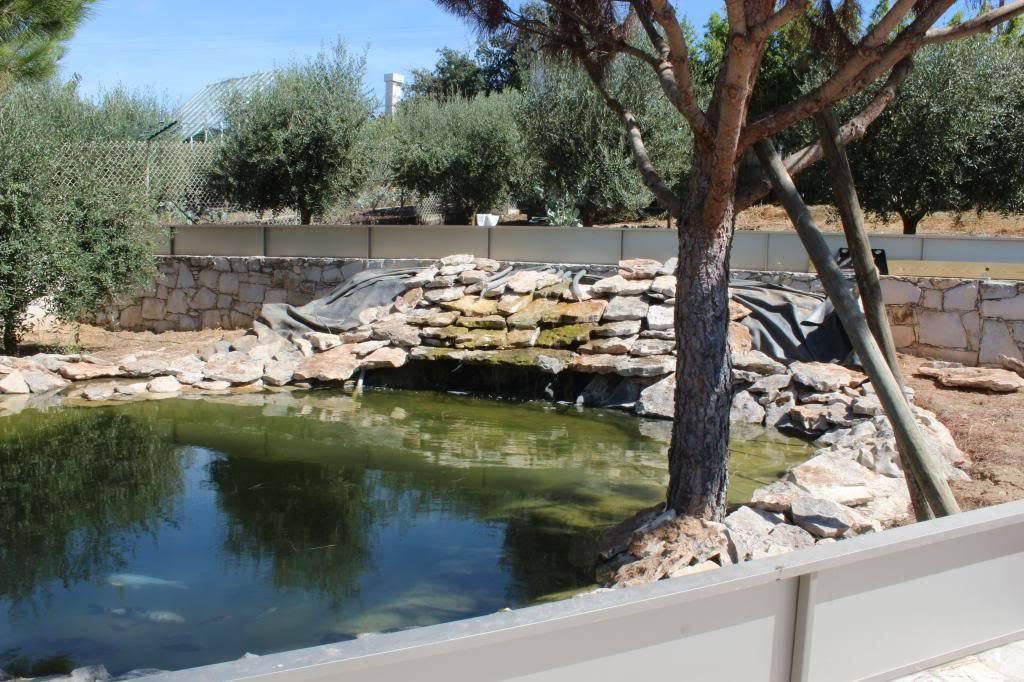 Aquaterrário---->Lago -Graptemys ouachitensis ouachitensis - Página 13 IMG_3881
